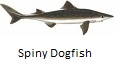 Spiny Dogfish fishing tips